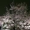 ひとりで千鳥ヶ淵の夜桜見物をしてきました。【花見】