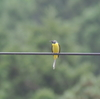 プチ遠征探鳥、奥秩父の野鳥・渡良瀬の野鳥・北本公園の野鳥。