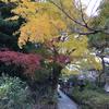 【鎌倉いいね】鎌倉紅葉情報11月18日現在。