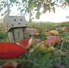 壮瞥町 道の駅にて秋の落ち葉拾い