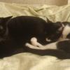 今日の黒猫モモ&白黒猫ナナの動画ー521