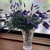 鉢植えと切り花をもらう