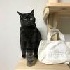 保護猫カフェNCRP(ネコリパブリック)のコーヒーとトートバッグを買いました