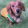 犬多頭飼い日記:てんかんが起きて1か月。