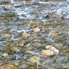 この川の冷たさを贈りたい