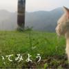 「そうだ、猫に聞いてみよう。No.4」(対人援助学マガジン27号)