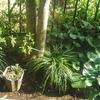 東側の庭の草花とぐい呑の棚の写真!