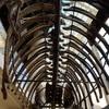 茨城県自然博物館はイチオシ!