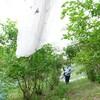 ブルーベリー農園の様子199(東広島市豊栄町)