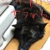 気づけば、春〜甲斐犬サンの場合〜ウソ━━Σ(-`Д´-;)━━ ン! !