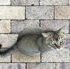 地味活な「ノラ猫と散歩」