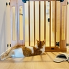 【猫学】猫との快適なマンション暮らしのためにわたしたちがしていること5選をご紹介。
