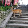 奈良公園にて大人修学旅行