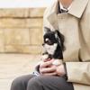 もみ消して冬第2話伝説の警察犬チャッピーがチワワ、笑えた〜。山田涼介✕犬が可愛すぎ!波瑠のファッションもね!