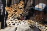 アムールヒョウやキタキツネ、ニホンザルをパシャリ! 旭山動物園を撮りまくる。