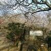 【2019年】筑波山梅林で春の空気を胸いっぱい吸い込んだ