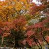 奈良県の紅葉スポット、3000本のもみじが織りなす「錦の里」大本山 正暦寺へ。旧奈良監獄と。奈良公園とか。