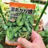 枝豆第3弾播種と葉ネギの鉢上げ