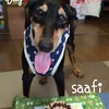 Saafi - お誕生日おめでとう
