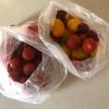 プチトマトの炊き込みご飯と塩トマト 夏野菜の下ごしらえと常備菜(3)