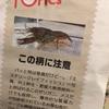 『読売中高生新聞』トピックス! メスだけで自らクローンをつくって繁殖する、侵略的外来種「ミステリークレイフィッシュ」!!