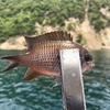 ゴムボート釣行 ③-2