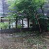 タケノコ観察記録 5/31