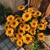 猛暑と花(2)