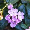 春のような花