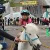 原宿(代々木公園・表参道) 無料イベント・フェス  ゴールデンウィーク・連休