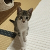 子猫はかわいいなぁ(´Д` )
