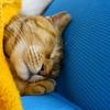 2月前半の #ねこ #cat #猫 どらやきちゃんB