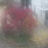 ロウバイ、紅梅、しだれ梅に節分草