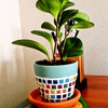 タイルを使って植木鉢をおしゃれにリメイク