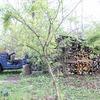 薪の積み重なる音が雑木林の中に響く季節