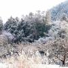 日本 散歩コースの雪景色