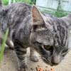 沖縄本部町の田空の駅「ハーソー公園」で動物たちと戯れる!