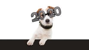 あの人からも!2020年、GOTCHA!執筆陣からの新年のメッセージをお届けします。
