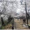 須坂市臥龍公園の桜がそろそろ見ごろ 臥龍公園のさくらまつり(2018)へ行ってみよう