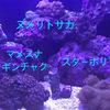 【サンゴ】ソフトコーラルの飼育に挑戦