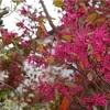 マジェンダピンクと白い花