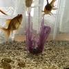 金魚の産卵処