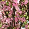 花木の花が咲いている