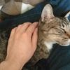 飼ってる猫が可愛いので見せる