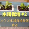 【水耕栽培 #2】ボックス水耕栽培装置の作成と定植