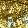 新機種CANON EOS 7D Mark II 試写 手賀沼公園の紅葉と飛び回るエナガたち