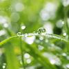 雨上がりの宝物