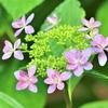 季節の花(令和三年六月2 )