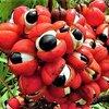【奇妙・不思議】ブラジルで食べられる7つのユニークなフルーツ【スーパーフード】