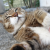 3月後半の #ねこ #cat #猫 その3